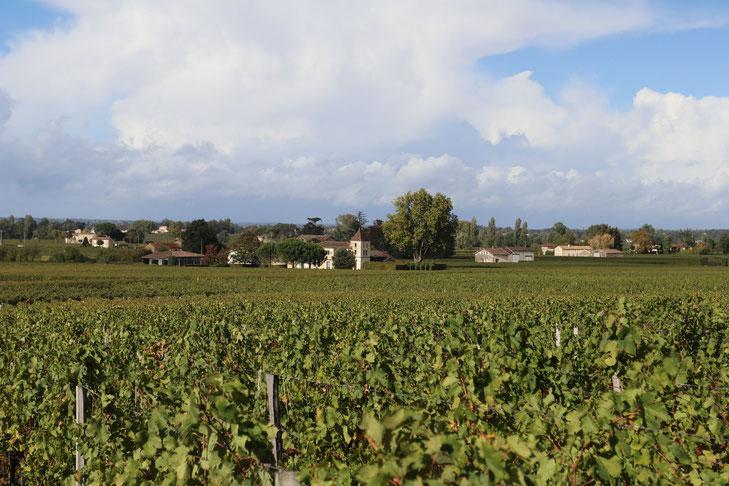 Weinberge in der Region St. Emilion
