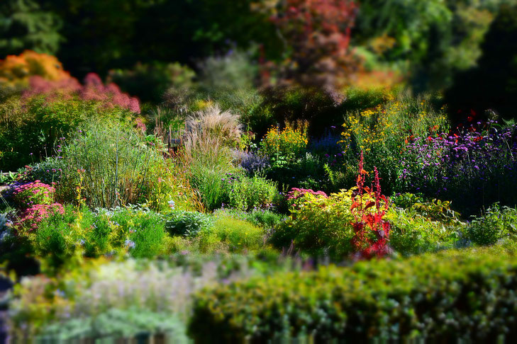 Blühende, bunte Stauden im Karl Förster Garten
