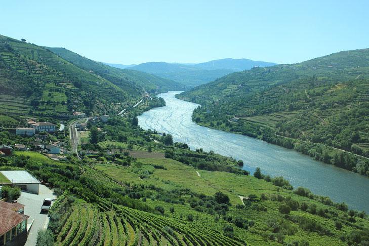 Douro Tal mit grünen Weinbergen am Ufer