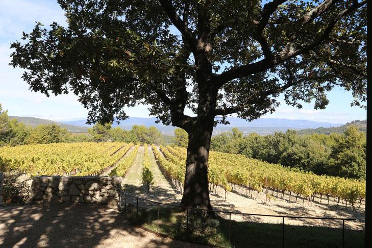 Weingut bei Aix-en-Provence