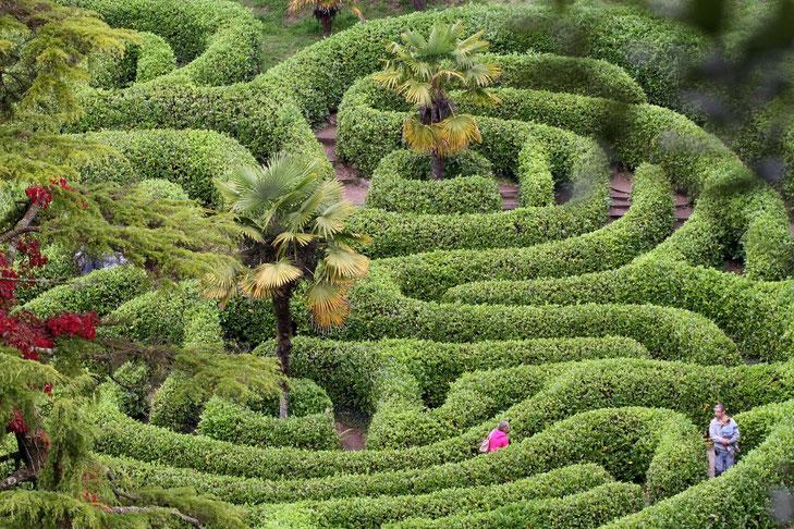 Irrgarten im Glendurgan Garden