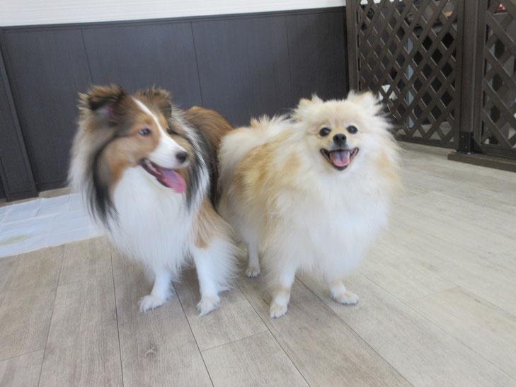 犬の保育園Babyのトレーニングルーム