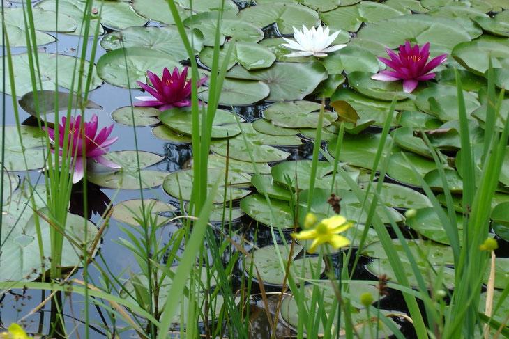 Entspannung am Gartenteich (Marianne Horn)
