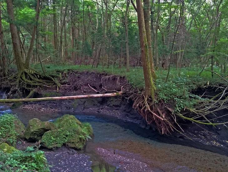 男池湧水 / 湯布院 大分川 水系 阿蘇野川水源