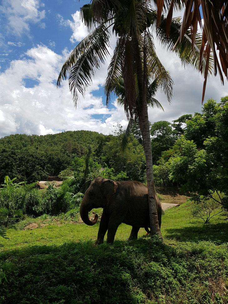 Nuestro día con elefantes!