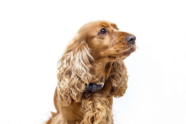 DM4U-D&M-natuurlijke-dierverzorging-hond-honden-pup-puppy-shampoo-hondenshampoo-conditioner-parfum-parfume-zalf-verzorgende-2000ml-5000ml-trim-trimsalon-hondensalon-groom-grooming