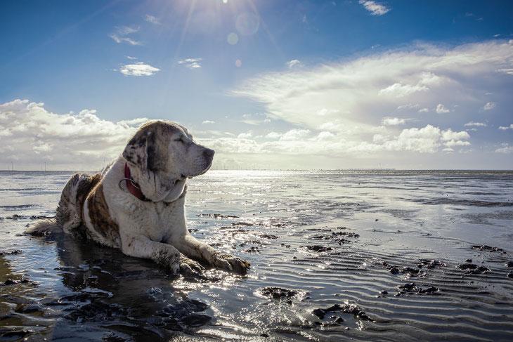 Ferienhaus Nordsee mit Hund