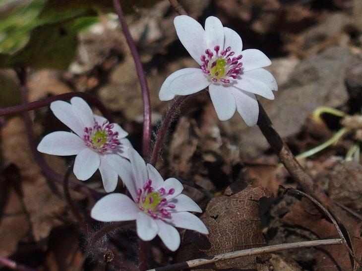 どうですこの三姉妹・・・🎶 どの花見てもきれいだなぁぁ!!