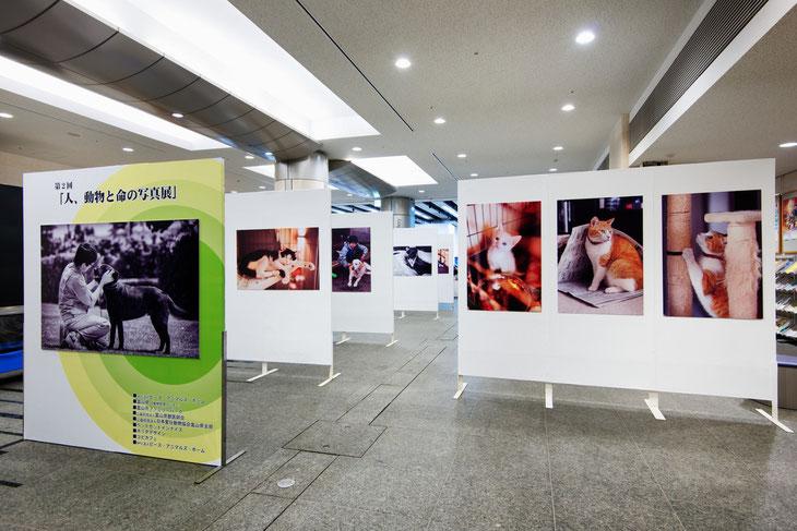 2012年に開催された第2回「人、動物と命の写真展」の展示風景から。