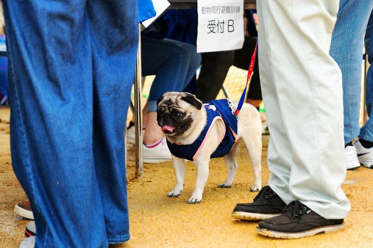 昨年の富山県動物同行避難訓練の様子から。