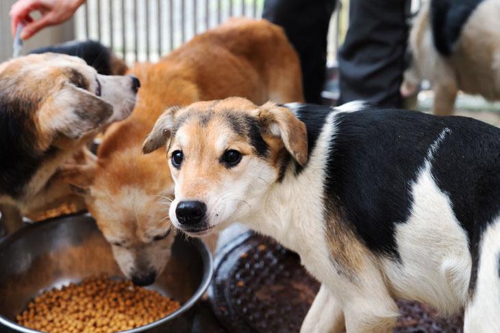 多頭飼育崩壊環境から保護した犬たち。