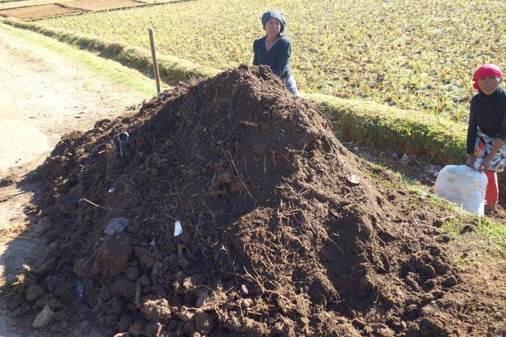 牛糞を活用した堆肥を小分けにする女性たち。このくらいの量で300円前後。イモ、トマトの肥料として使われます。