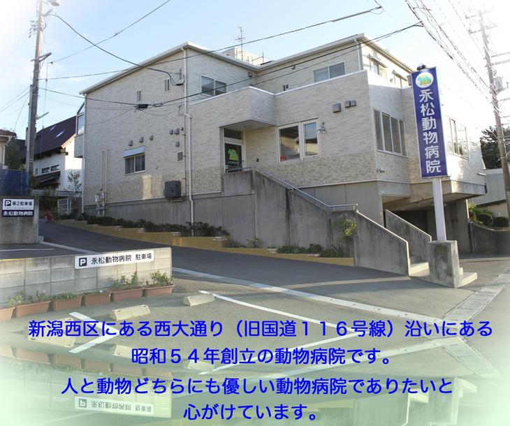 新潟市西区にある動物病院です。