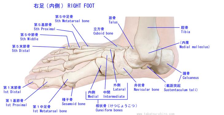 足はたくさんの骨で構成されています。骨がずれる事によって足の指の痛みの原因になります。