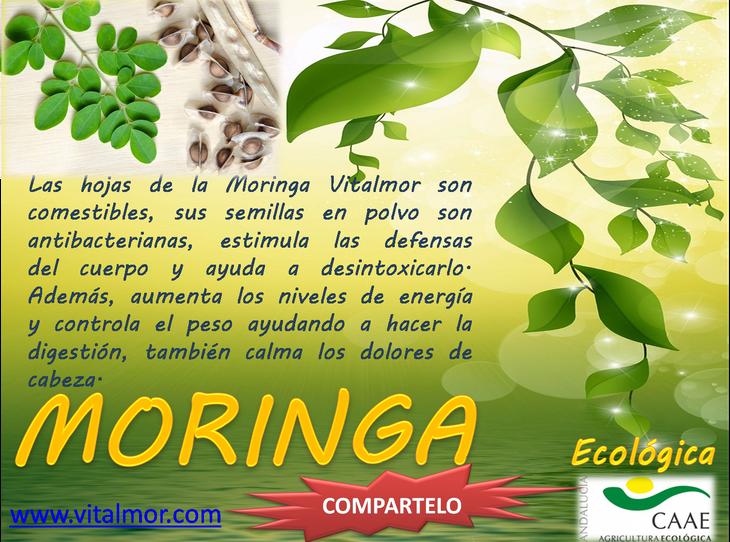 Propiedades de las hojas y semillas de la Moringa