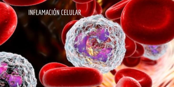 La inflamación celular