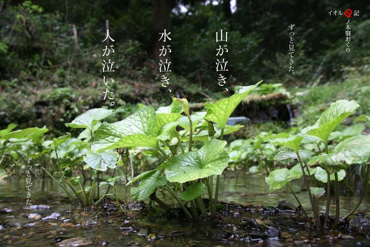 ©小林伸司 / ヒノモトカゲオクリ