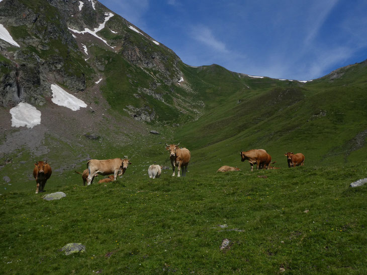 et oui, nous on fait de la montagne à vache !
