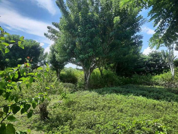 Land for sale in Uluwatu