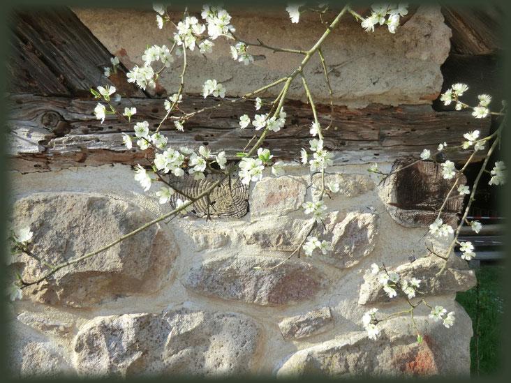 Schwarzwaldhäuser erleben viele Frühlinge.
