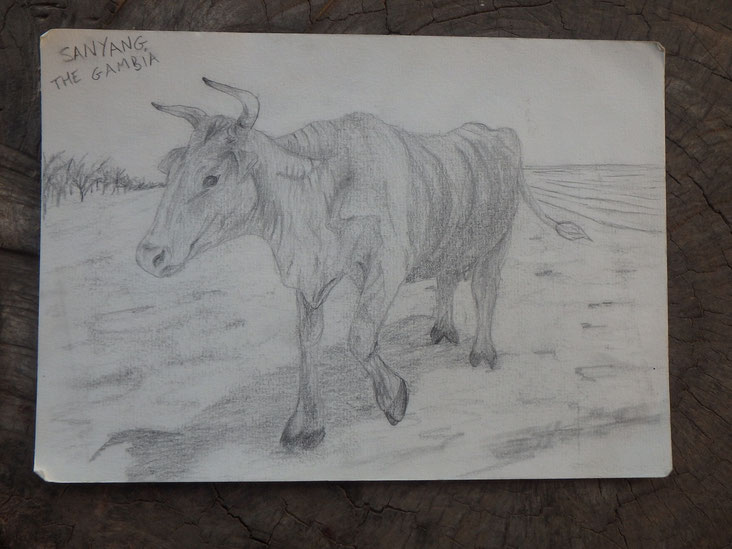 Pencil drawing of a cow