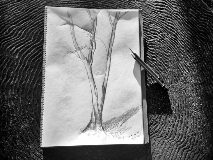 冬の木 01