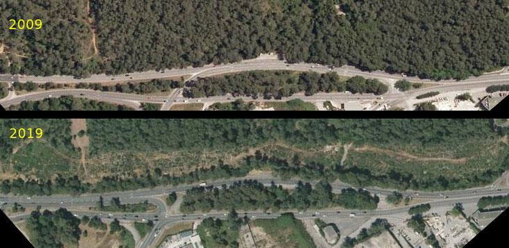 Une bande de 5 hectares de forêt a été rasée pour les accès à Open Sky