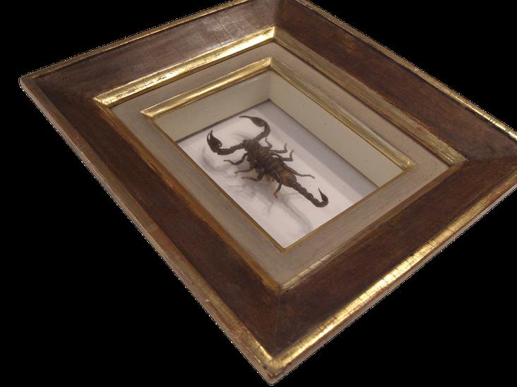 Rahmen Eder Wien Im Zeichen des Skorpions