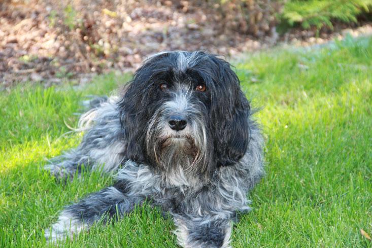 Hallo hondenliefhebber, u kunt mij alles vragen :-)