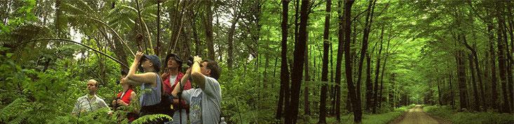 Riserva Forestale Arabuko Sokoke