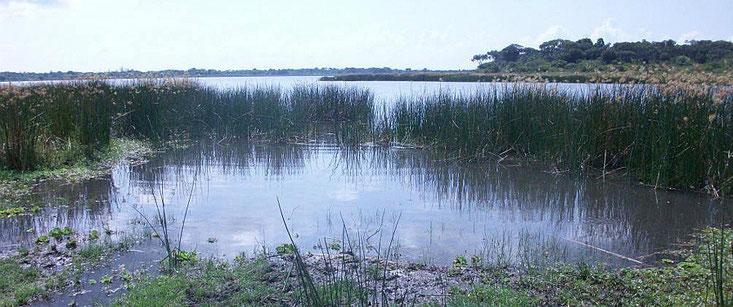 Lago Kenyatta