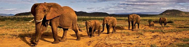 Elefanti - Kenya Vacanze