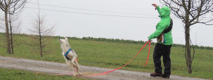 Das Futter fliegt hinter den Hund (Foto cumcane familiari)