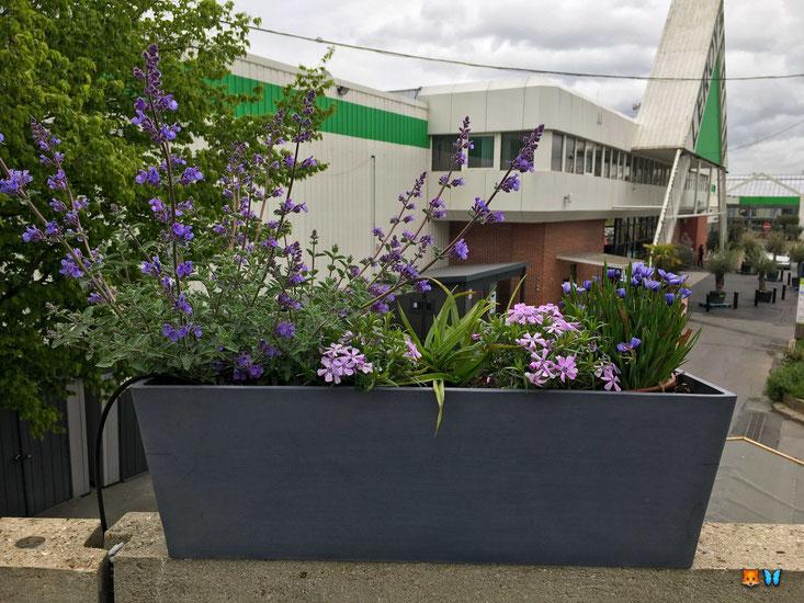 Rendu d'une jardinière de fleurs violettes
