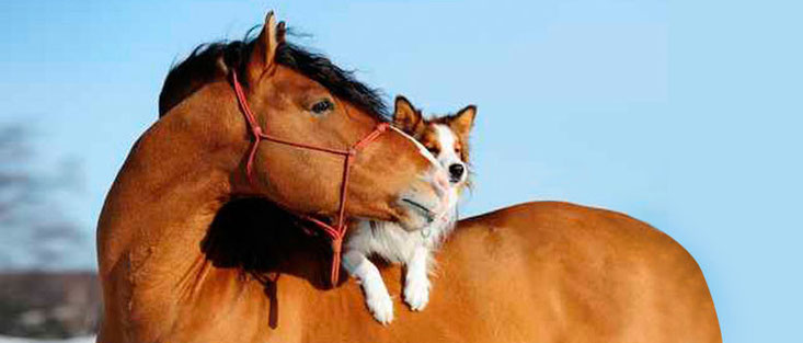Perro_jugando_con_caballo