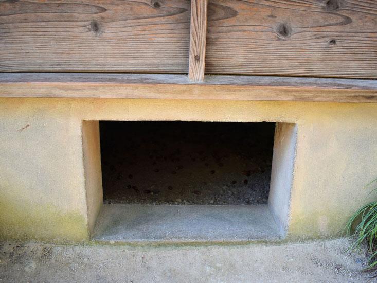 この軒下はもしや…覗いた人情報によると、中にどんぐりが落ちているそうです。