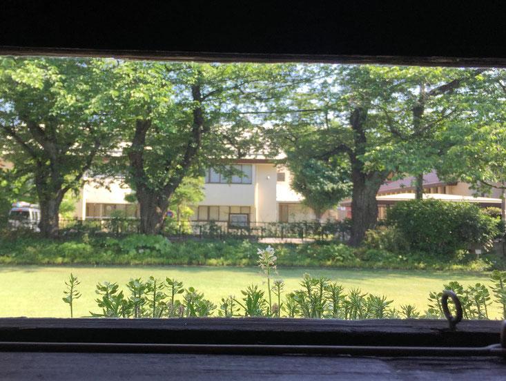 喫茶店の窓際から見えた景色。当時は校庭として使用していたのかな?