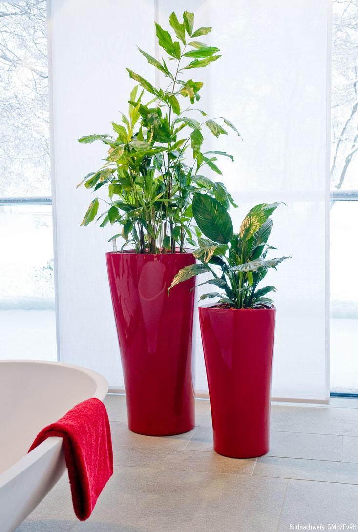 Nicht Nur Furs Buro Grunpflanzen In Dekorativen Xxl Gefassen Gruenedekorations Webseite