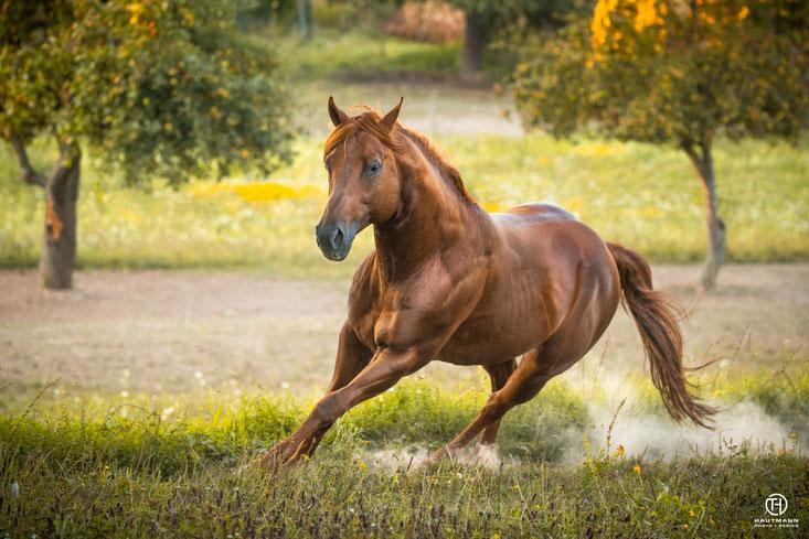 Gwhiz im smart Quarter Horse Hengst - Spook - Roxxter
