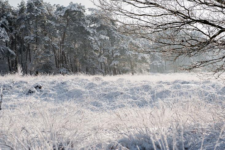 Graspollen onder de sneeuw. Landschaps fotografie