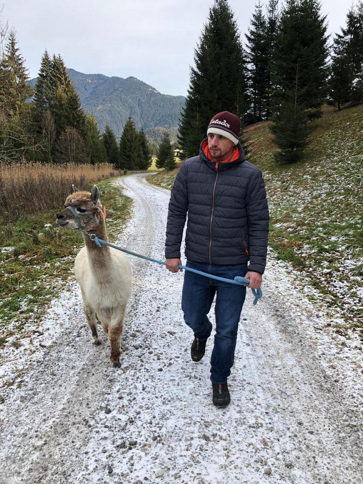 Training zum Alpakaführer, Erlebnis mit Alpakas, Trekking mit Alpakas, Reutte, Tirol, Alpaka, Alpen