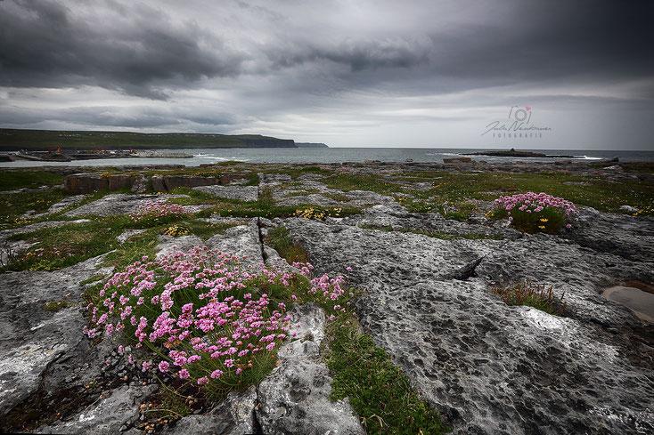 Irland_The Burren_Wohnmobil_Hund_Roadtrip