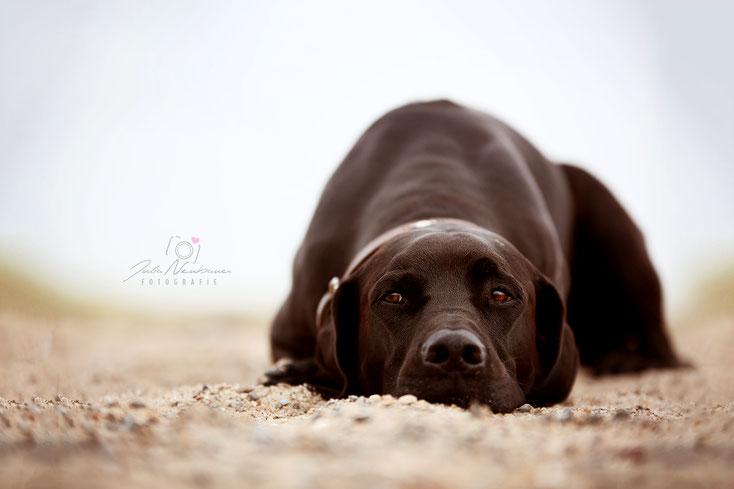 Dänemark mit Hund_Erfahrungen_Hundegesetz