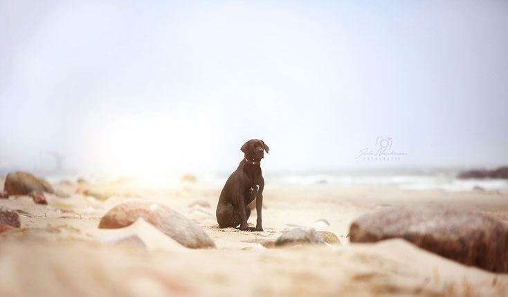 Dänemark_Urlaub mit Hund_Hundegesetz_Erfahrungen_Die Roadies