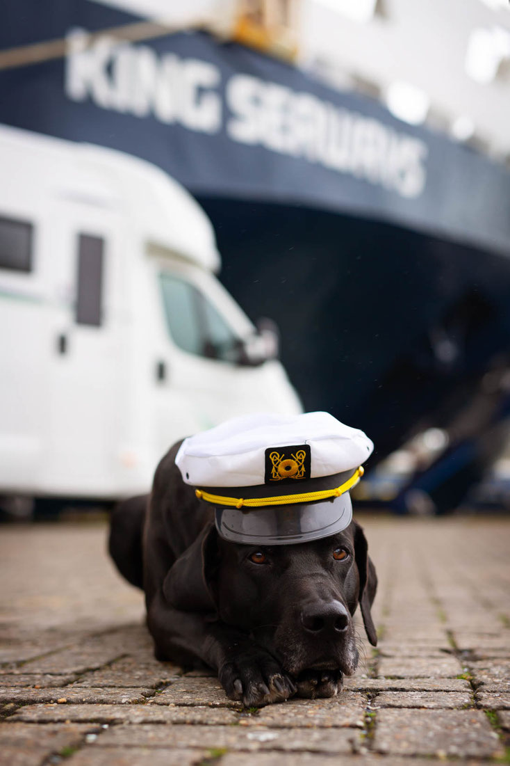 Fähre_Schiff_Wohnmobil_Hund_DFDS_Amsterdam_Newcastle