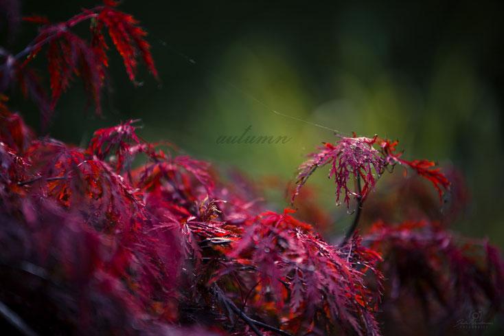 Herbst_Blätter_Fotografin Julia Neubauer_Die Roadies