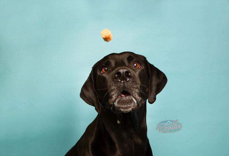 Hund_Futter_gesund_Leckerchen_Hundefutter_Inhaltsstoffe