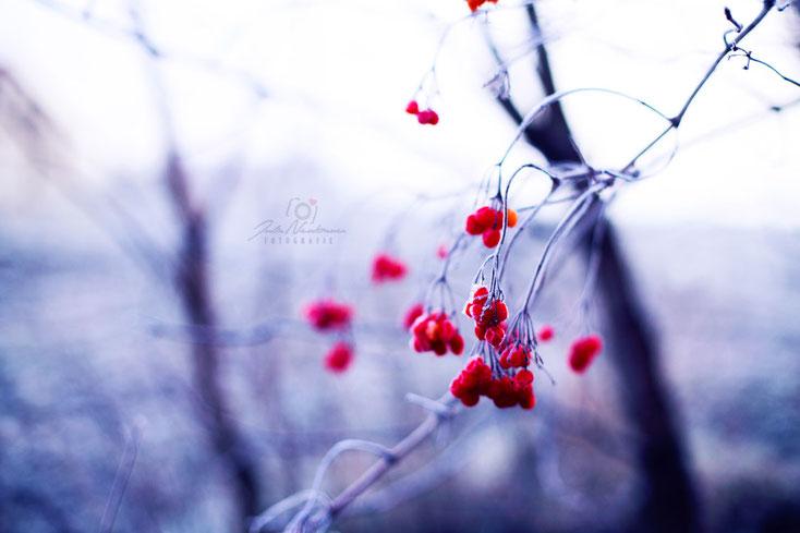 Blumen_Frost_Beeren_Die Roadies_Landschaft_Fotografin Julia Neubauer