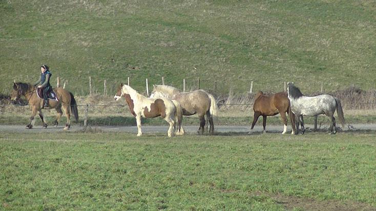 Les cinq chevaux en communication
