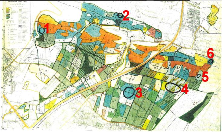 Untersuchungsflächen für das Wald-Projekt (Quelle: Umweltbetrieb /  Forsten der Stadt Bielefeld)